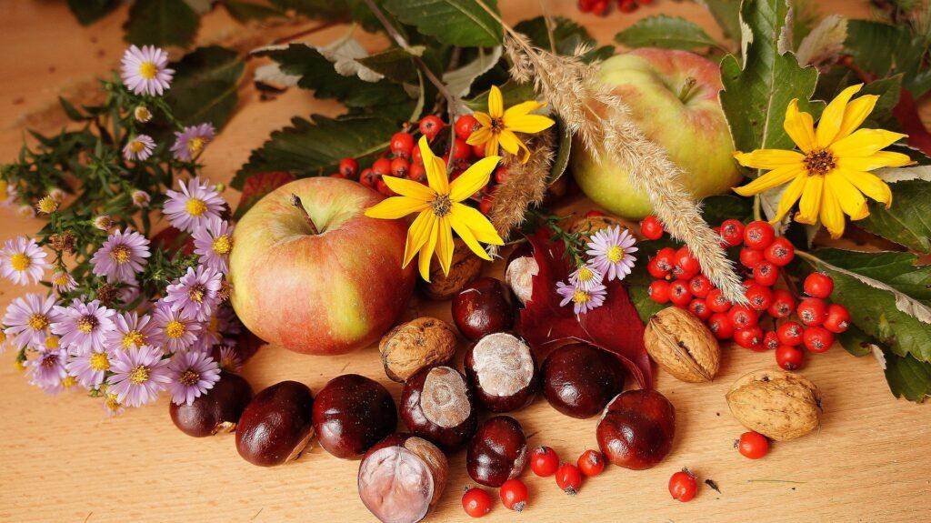 Sjove og anderledes kastanjedyr i efterårshyggen